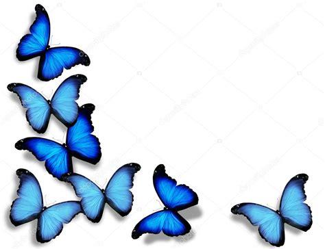 imagenes de mariposas azules animadas mariposas de bandera azul aisladas sobre fondo blanco