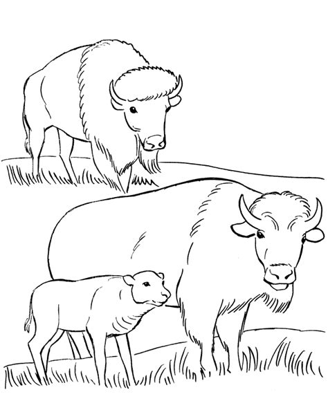 coloring pages buffalo coloring home