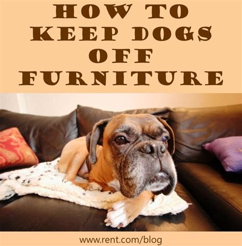 how to keep dogs furniture furniture on and