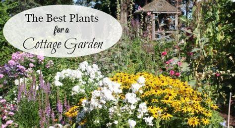 list  cottage garden plants  ultimate guide