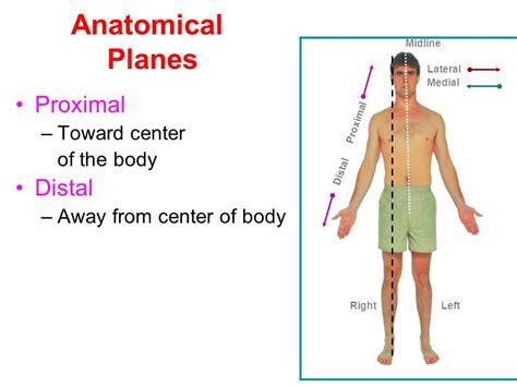 Berühmt Distal And Proximal Anatomy Bilder - Anatomie Von ...