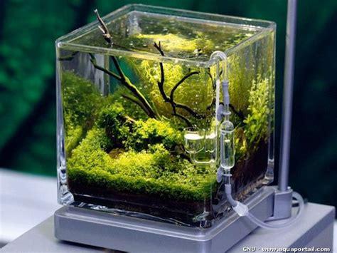 Aquascaping Inspiration Le Pico Aquarium Eau Douce Plant 233