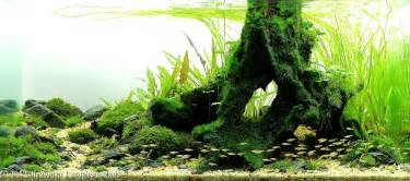 Aquascaping Ideas For Planted Tank 2012 Aga Aquascaping Contest Entry 101