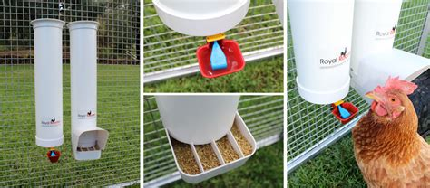 Chicken Feeders And Waterers Australia royal rooster chicken poultry coop waterer drinker