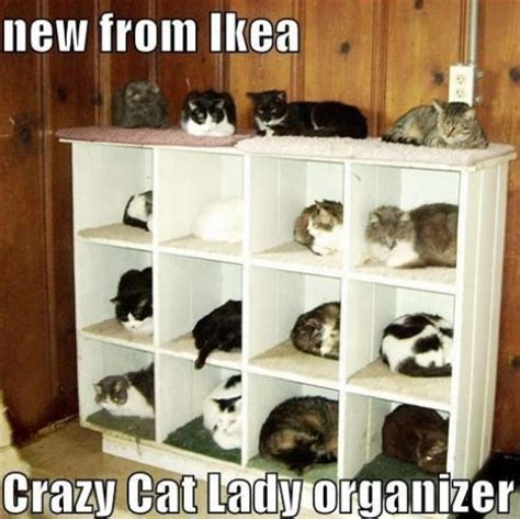 Crazy Cat Lady Meme - 11 best pics of the crazy cat lady meme