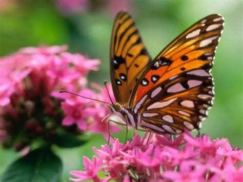 wallpaper free butterfly butterfly desktop wallpapers amazing picture collection