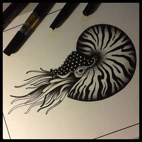 nautilus tattoo best 25 nautilus ideas on fibonacci