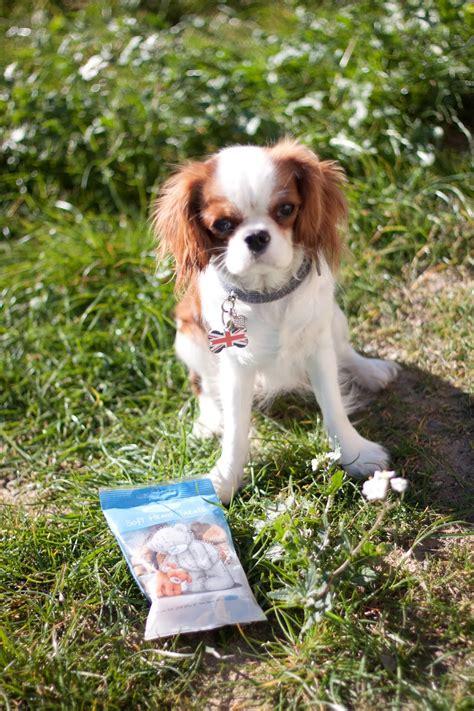 photo de chien  vendre pas cher