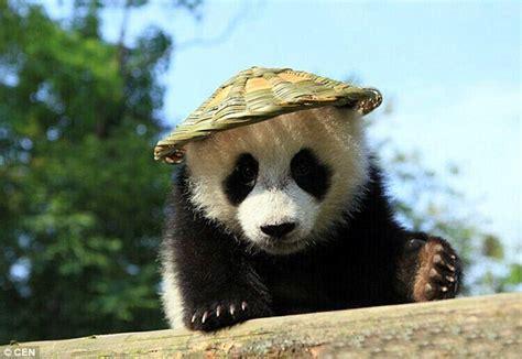 images of panda bears panda emulates animated kung fu