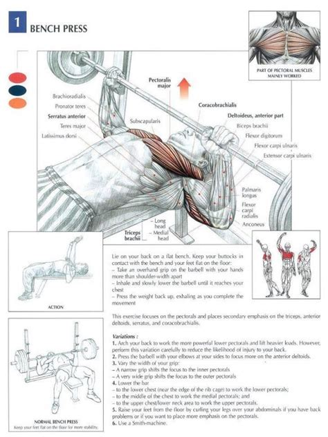 chest workouts without a bench 25 best ideas about bench press on pinterest bench