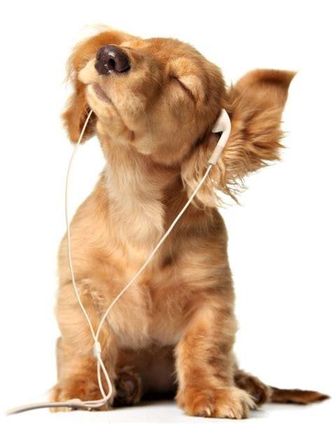 puppy with headphones using headphones 1funny