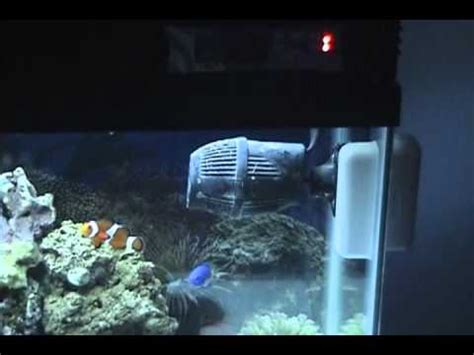 29 gallon fish tank light part 1 my 29 gallon marine salt water aquarium coral reef