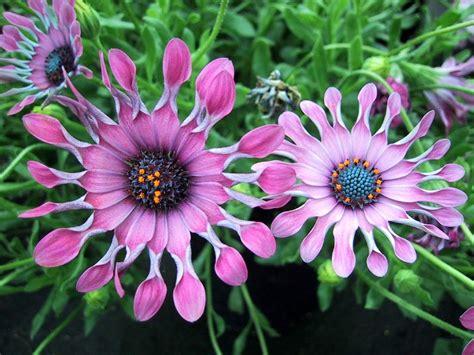 imagenes sorprendentes de flores flores que hermosas son no taringa