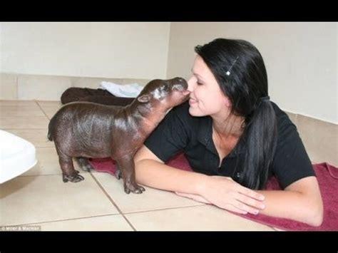youtube video of hippo chasing boat домашний бегемот документальный фильм youtube