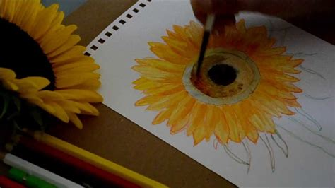 watercolor tutorial sunflowers how to paint sun flower with water color revised youtube