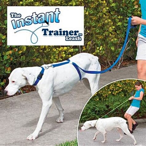 how to to stop pulling on leash instant trainer leash 30 lbs stop pulling walk alex nld