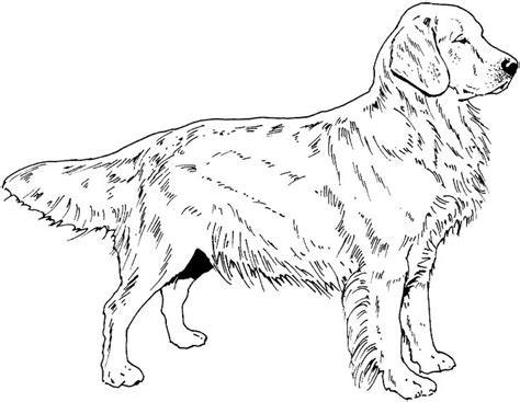 coloring book pages dog breeds dog breed coloring pages find beautiful coloring pages at