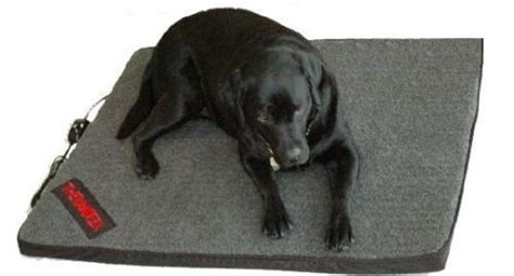 heated dog bed 17 best images about beds on pinterest therapy sausage dogs and dog beds