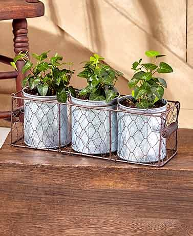 Wire Basket Planter by Galvanized Planters In Wire Basket The Lakeside Collection