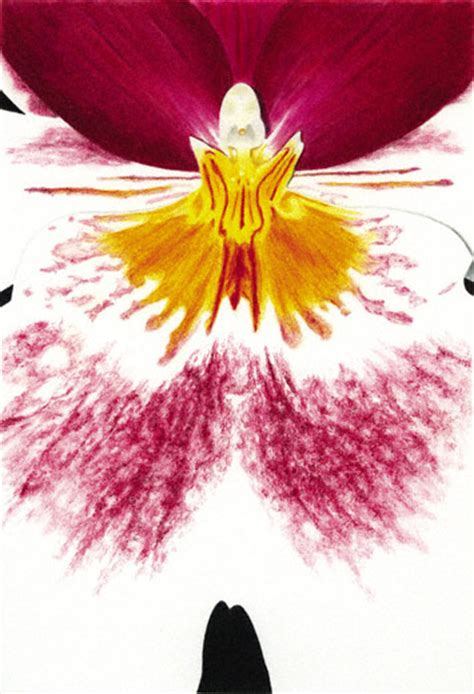 Colored Pencil Demo An Orchid By Gary Greene Artist S Colour Drawing