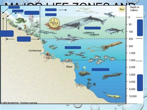 Continental Shelf Organisms by Marine Biomes