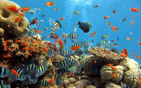 Marine 35gr Makanan Ikan Laut Free limakaki sebelum berkunjung ke taman laut bunaken
