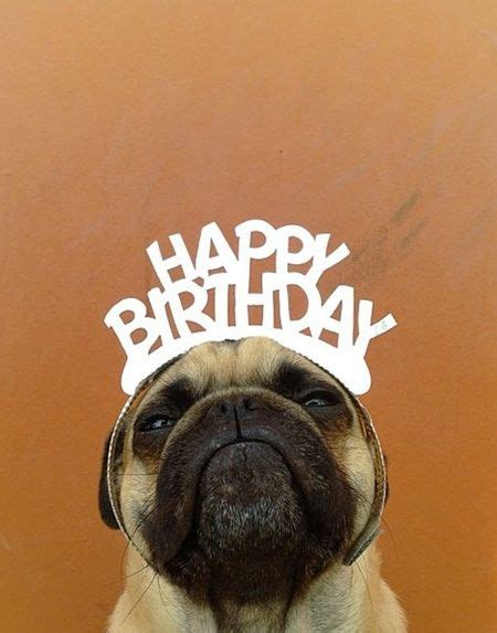 Happy Birthday Pug Meme - norm pug happy birthday pets animals dogs cute