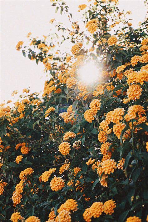 yellow flower  macro lens photography  stock photo
