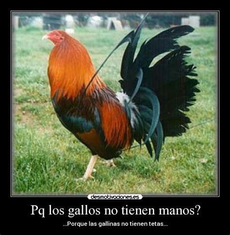 frases para gallos de rias pq los gallos no tienen manos desmotivaciones