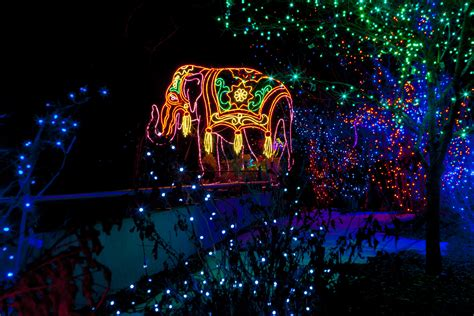 denver zoo s zoo lights shines twice as bright in 2015