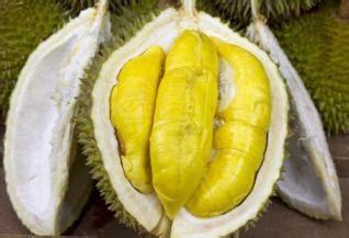 Cari Bibit Kelengkeng Itoh bibit buah jual bibit pohon tanaman