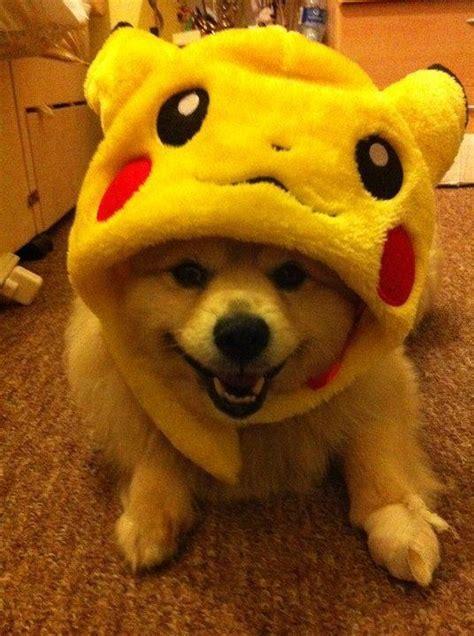 pug pikachu happy real pumpkaboo pok 233 mon dungeon