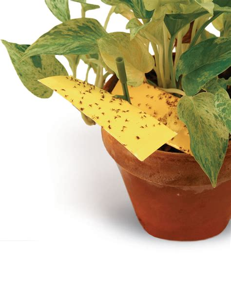 pests what to look for on indoor plants leaf and paw