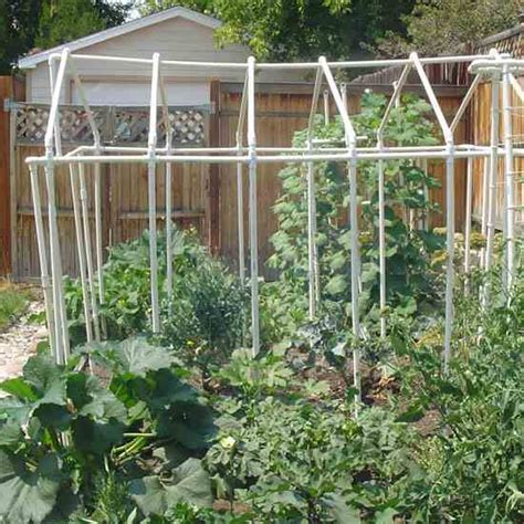 growing vegetables in backyard growing your own vegetables in a backyard garden yard