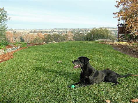 oak landscaping 187 lawnsblue oak landscaping chico landscaping pavers