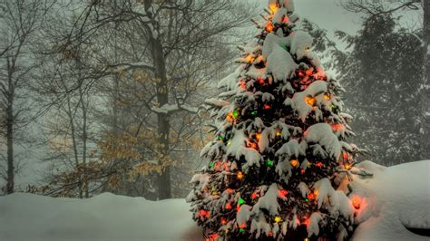 hd wallpaper  year christmas tree