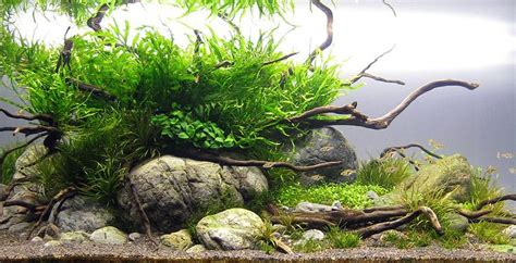 simple aquascape layout love the simple river rocks and basic layout aquascape