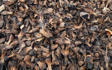 Sigma Utama Paint sell palm cangkang from indonesia by cv sigma trans utama cheap price