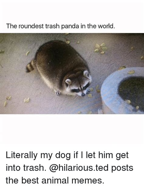 gets into trash 25 best memes about pandas pandas memes