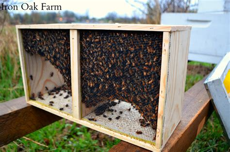 backyard bees the difference between a package and a nuc keeping