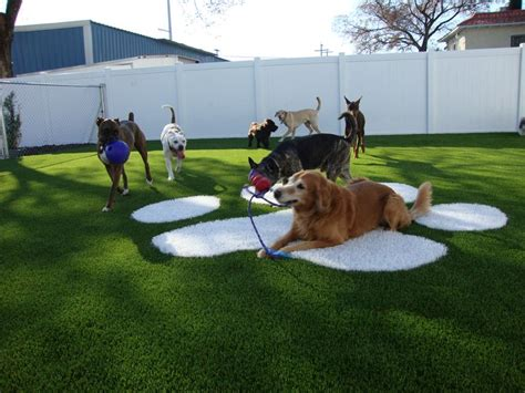 turf dogs 25 best ideas about hotel on boarding hotels that take dogs and