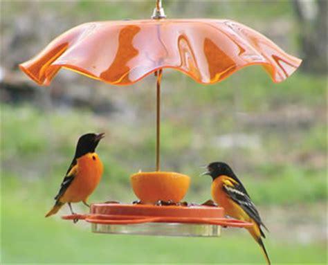 thunder ridge gardens birds and wildlife oriole bird