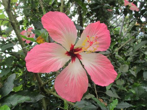 names of plants in the tropical rainforest matelic image rainforest plant pictures and names