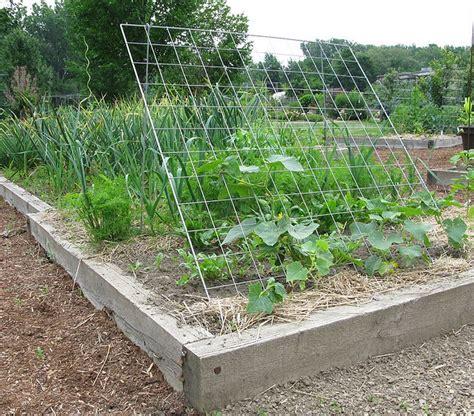 Vegetable Garden Trellis Trellises For The Vegetable Garden For The Home