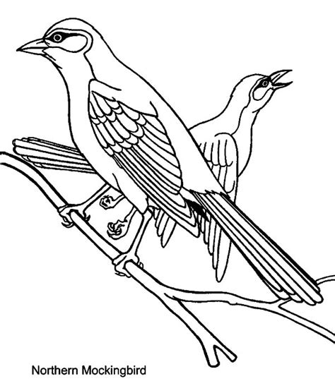mockingbird coloring pages northern mockingbird drawing www pixshark com images