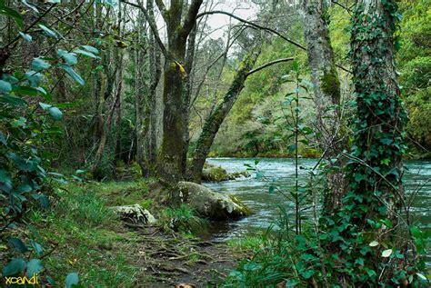 en un bosque muy el bosque ecuatorial o selva tiene un clima ecuatorial en el que las lluvias son muy abundantes