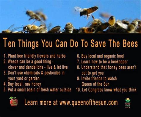 10 Things You Can Only Do In The Summer by Save The Honey Bee Bees Them Save And