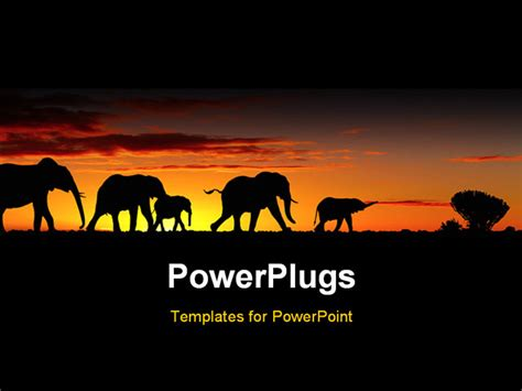 Powerpoint Template A Group Of Elephants With Sunset In The Background 11076 Elephant Powerpoint Template