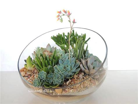 Terrarium Coffee Table by Half Moon Desert Urban Succulents