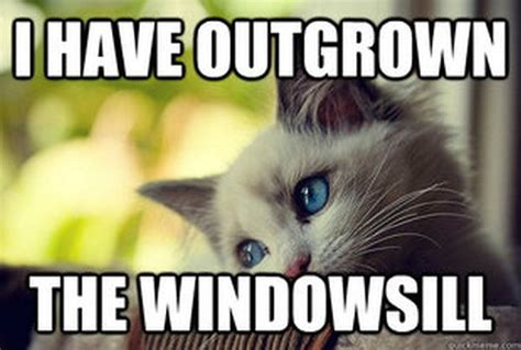 Cat Problems Meme - first world problems cat 60 pics